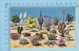 Flora In USA - Cactus Et Desert En Fleurs Arisona- 2 Scans - Fleurs