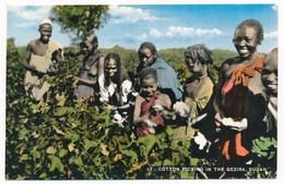 SUDAN,  Coton Picking In The Gezira , Nice Stamp , Par Avion ,old Postcard - Soudan