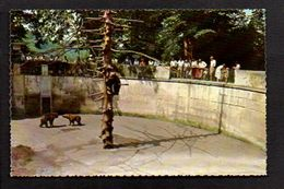 Animal / Faune Sauvage  / Fosse Des Ours Au Zoo De Berne Bern - Ours