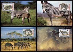 WWF Ethiopia Ethiopie Äthiopien Grevy´s Zebra Grevyzebra Zebre 2001 CM MC MK Maxi Card Carte Maximum Maxicards - Maximum Cards