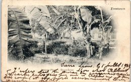 AFRIQUE -- SIERRA LEONE - Banana Plant - Freetown - Sierra Leone
