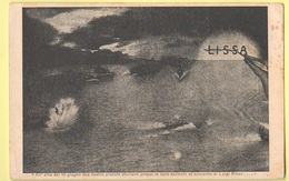 Lissa Battaglia Cp Di Propaganda Edita Croce Rossa Venezia 1918 - Guerra 1914-18