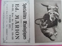 Petit Calendrier De Poche à Deux Volets/Chatons-Pelote/Ed Marion/Spécialités Œnologiques/Rue De Bercy/Paris/1924 C - Petit Format : 1921-40