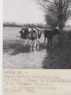 Agriculture - Agronomie - Lerzy La Capelle M. Langhendriers Aisne - Elevage Vaches Culture - Lot 3 Photos  - 1949 - Cultures