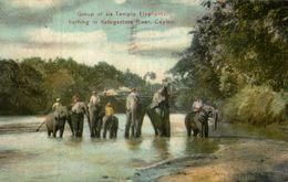 CEYLON. GROUPE OF SIX TEMPLE ELEPHANT BATHING IN KATUGASTOTA RIVER - Sri Lanka (Ceilán)