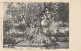 """CPA - Jérusalem. - Gethsemant - Le Plus Gros Des Oliviers.  """"La Vie Pittoresque En Orient"""" - Série J, N° 4 - Israel"""