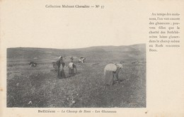CPA - Bethléem - Le Champ De Booz - Les Glaneuses . Collection Mulsant Chevalier - N° 37 - Israel
