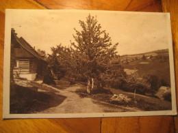 VYSOKE N. JIZ. JARO V Horach 1934 Post Card CZECHOSLOVAKIA - Czech Republic