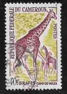 Cameroun, Scott # 372 Used Giraffes, 1962 - Cameroon (1960-...)