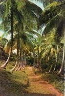 LOT DE 35 CPA : LES ANTILLES COSTUME CARAIBES COTE AU VENT KOUROU PAPEETE CARIBBEAN BOISLAVILLE BRISCANTE - France
