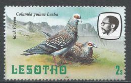 Lesotho 1981. Scott #322 (M) Rock Pigeons, Birds, Oiseaux - Lesotho (1966-...)