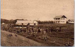 AFRIQUE -- CAMEROUN -- Neupflanzung - Cameroon