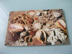 Conchiglia Shell SELECTION OF JAMAICAN SHELLS AND CORAL ANNULLO ROSSO PERU' PICCOLO FORMATO - Pesci E Crostacei