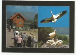 ALTREU SO Selzach Schweiz. Gesellschaft Für Den Weissstorch Storch Grenchen 1996 - SO Solothurn