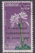 Somalia Scott 242 1960 Independence Flower, Used - Somalie (AFIS)