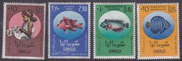 Somalia Scott 260-262 + C84 1962 Fish, Mint Never Hinged - Somalia (AFIS)