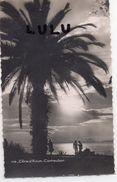 CONTRE LA LUMIÈRE ; édit Mar A Nice N° 308 : Cote D Azur Contre Jour , Crépuscule - Halt Gegen Das Licht/Durchscheink.
