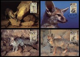 WWF Israel Blanford´s Afghan Fox Renard  Fuchs 2000 4 CM MC MK Card Carte Maximum Maxicards Maximumkarten - Maximum Cards