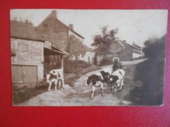 Sy :Ferme Du Vieux Chemin-Animée (S178) - Ferrières