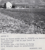 Agriculture - Agronomie - La Ravoire Savoie - Essais Plantations Blé Pommes De Terre - Elevage - Lot De 10 Photographies - Cultures