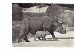 CPSM - Jardin Zoologique BALE - Suisse - Rhinocéros Unicorne Et Son Bébé - - Rhinoceros