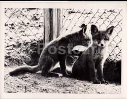 Fox - 2 - Photo - Estonia USSR - Unused - Sonstige