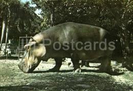 Hippopotamus - National Zoo - Cuba - Unused - Hippopotames