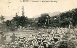 LA SOUCHE(MOUTON) - France