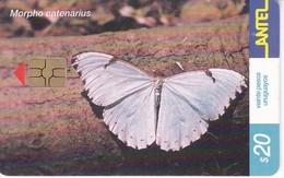 246 TARJETA DE UNA MARIPOSA DE URUGUAY MORPHP CATENARIUS (BUTTERFLY) (GHIP G-5 ROJO) - Uruguay