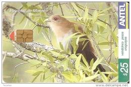 Nº 338 TARJETA DE URUGUAY DE UN PIRINCHO DE MONTE (PAJARO-BIRD) - Pájaros