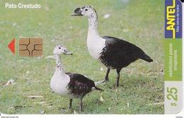 Nº 114 TARJETA DE UN PAJARO DE URUGUAY PATO CRESTADO  (BIRD)  (CHIP G5 ROJO) - Uruguay