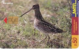 Nº 120 TARJETA DE URUGUAY DE ANTEL DE UNA BECASINA (PAJARO-BIRD)  (CHIP G4 NEGRO) - Uruguay