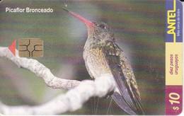 Nº 127 TARJETA DE URUGUAY DE UN PICAFLOR BRONCEADO - COLIBRI  (BIRD-PAJARO)  (CHIP G5 ROJO) - Uruguay