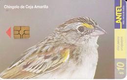 Nº 130 TARJETA PAJARO CHINGOLO CEJA AMARILLA DE 10$ (BIRD) (CHIP G-4 NEGRO) - Uruguay