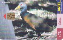 Nº 148 TARJETA DE URUGUAY DEL CHIRICOTE (BIRD-PAJARO) (CHIP G5 ROJO) - Uruguay