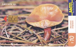 Nº 157 TARJETA DE URUGUAY DE LA LACCARIA SP. (SETA-HONGO-MUSHROOM) (CHIP G-4 NEGRO) - Uruguay