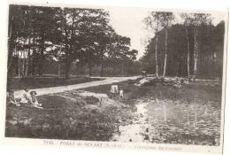 ---- 91 -----  Forêt De Senart Carrefour Du Cornier Neuve TTB - Sénart