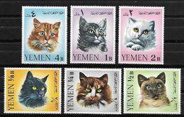 Chats - Domestic Cats