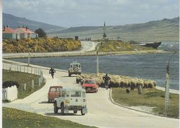 Falkland Islands Sheep Drive Ross Road Stanley Postcard Unused (36835) - Falklandeilanden