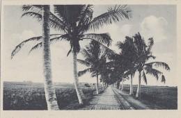 Afrique - Mozambique - Beira - Ex Portugal - Avenida Da Manga - Manga Avenue - Mozambique