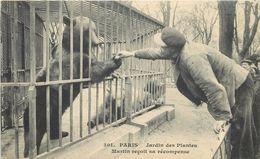 PARIS - Jardin Des Plantes,Martin (l'ours) Reçoit Sa Récompense. - Ours