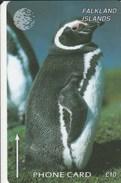 Falklands Is. - Jackass Penguin  - 184CFKB - Falkland Islands