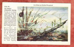 Quittung Berliner Morgenpost 1934, Tier-Bilder, Suesswasser-Polyp (41695) - 1900 – 1949