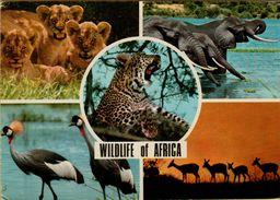141550 WILDLIFE OF AFRICA - Cartoline
