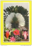 SÃO TOMÉ E PRINCIPE BOTANIC BOTANIQUE FLOWERS FLEURS AFRICA AFRIKA AFRIQUE POSTCARD - Sao Tome And Principe