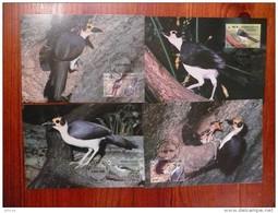 WWF Sierra Leone White-necked Picathartes Gelkopf-Felshüpfer 1994 CM MC Carte Maximum Maxicard MAximumkarte - Maximumkarten