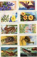 N°55746 -lot 96 Images Francorusse - Kaufmanns- Und Zigarettenbilder