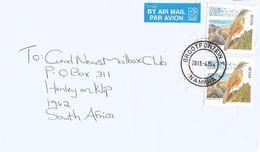 Namibia 2013 Grootfontein Damara Rock-jumper (Achaetops Pycnopygius) Bird Cover - Namibië (1990- ...)