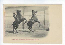 CPA Animée Régiment De Cavalerie Saumur Dressage Des Sauteurs En Tandem Hérault Photographe Suter Bâle - Saumur