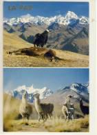 BOLIVIA - LA PAZ,  Condor Y La Llama, Lama,   Nice Stamp - Bolivie